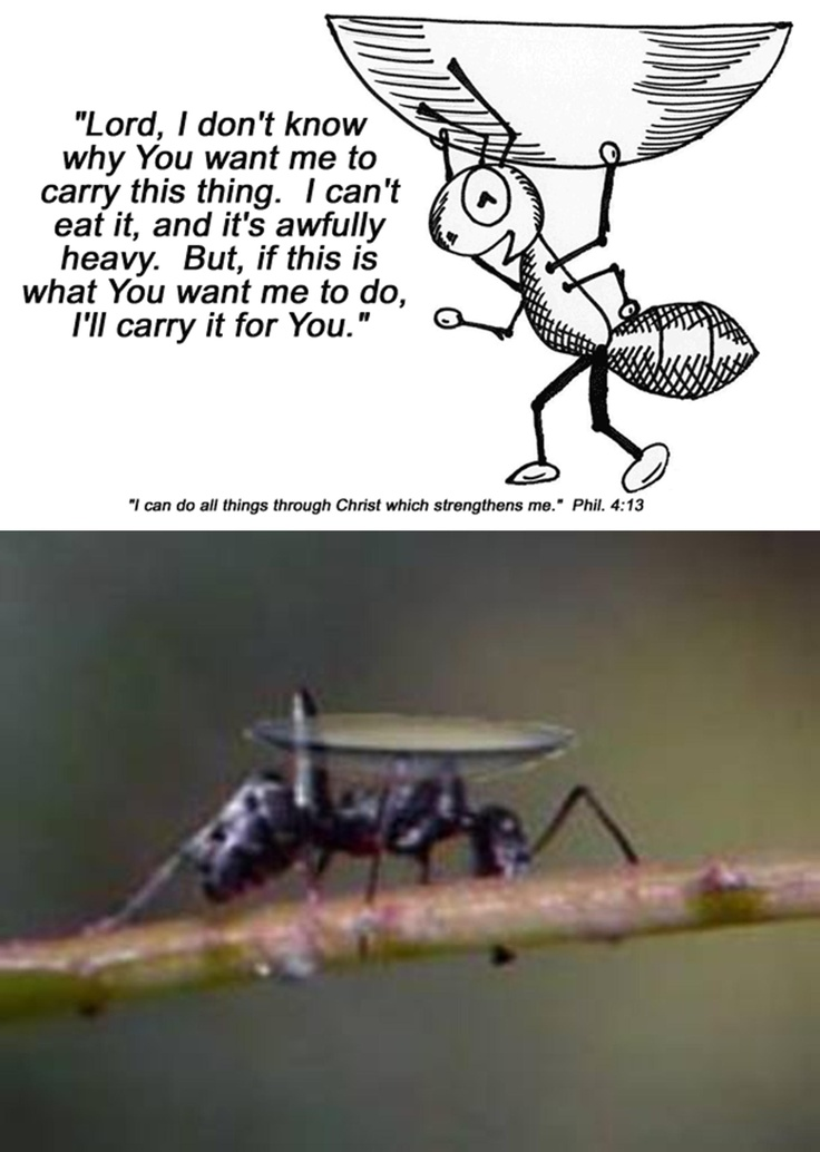ant carrying contact lens